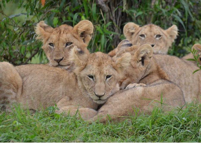 Les endroits exceptionnels à visiter durant un voyage au Kenya